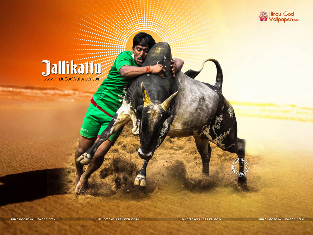 jallikattu wallpapers hd photos images pictures download jallikattu wallpapers hd photos