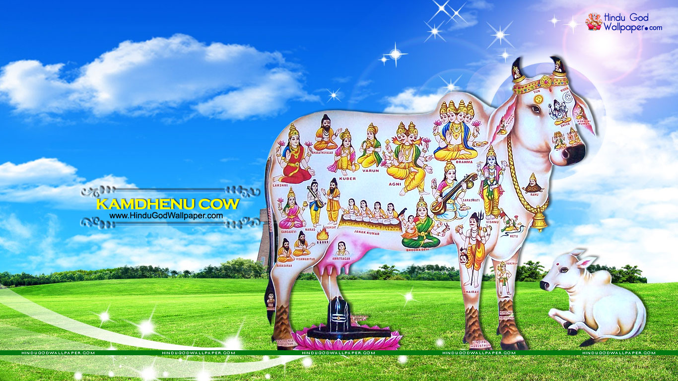 Kamdhenu Cow Wallpapers Pictures Images Download