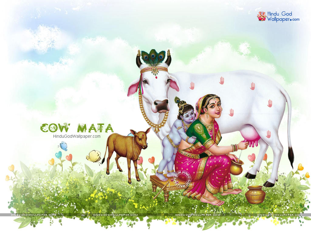 Cow Mata Wallpaper