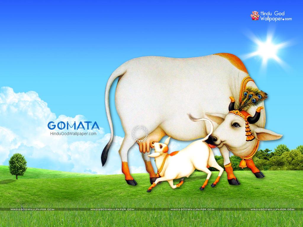 Gomata Wallpapers