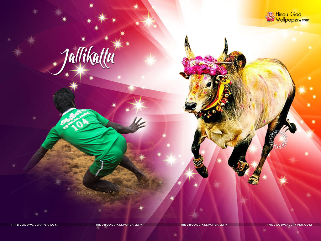 Jallikattu Kaalai Wallpapers