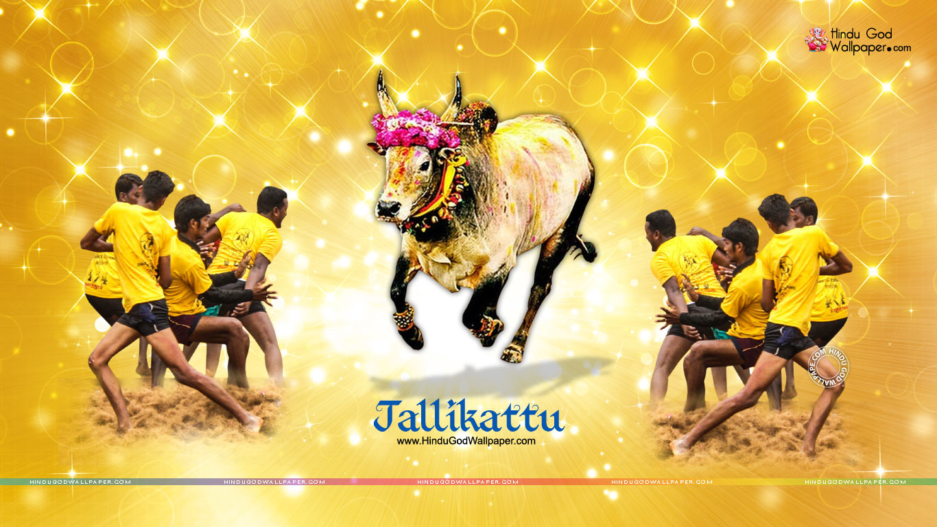Pongal Jallikattu Wallpapers