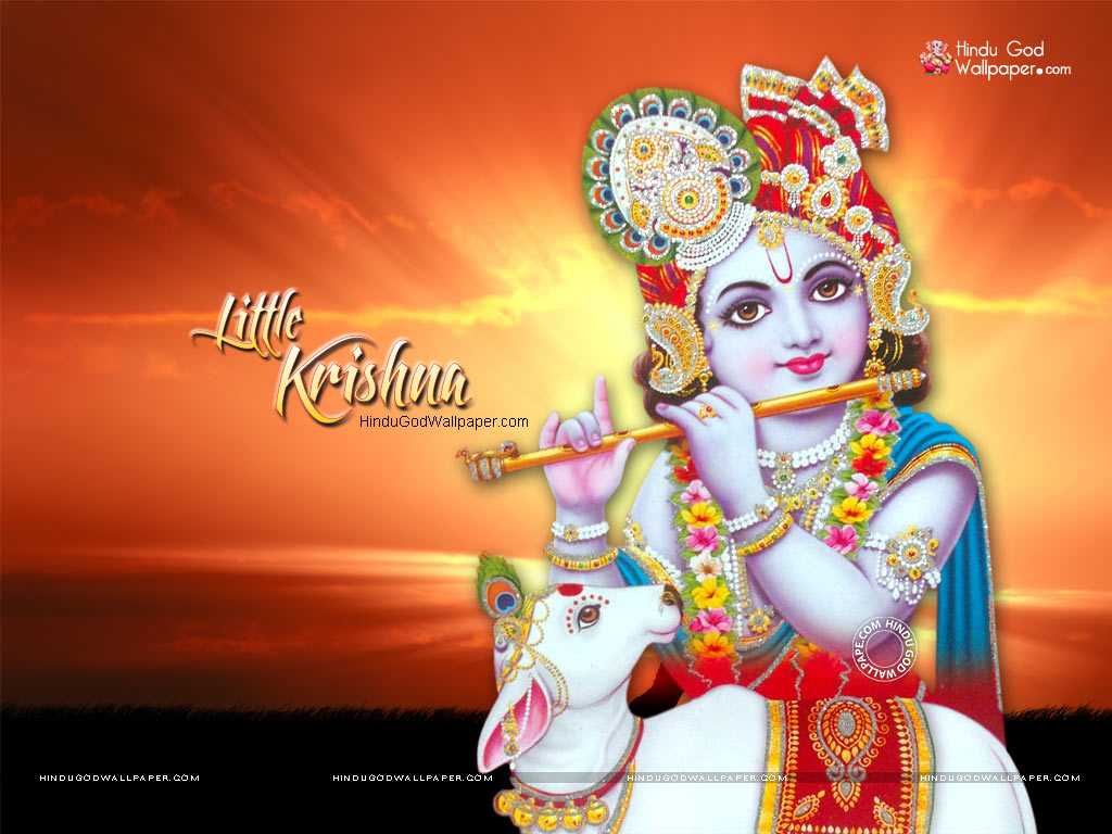 3166 little krishna wallpaper